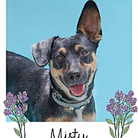 Adopt A Pet :: Misty - Savannah, GA