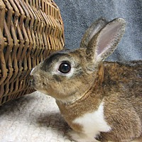 Adopt A Pet :: Devan - Newport, DE