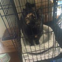 Adopt A Pet :: Sophie - Denver, CO