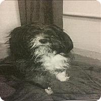 Adopt A Pet :: Lightning - Encino, CA