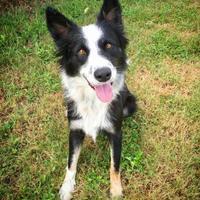 Adopt A Pet :: Trixie - Fredericksburg, TX