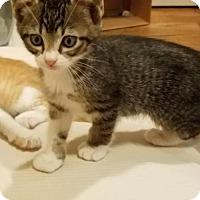 Adopt A Pet :: Tiggy - ROSENBERG, TX