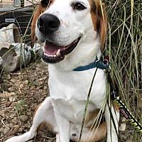 Adopt A Pet :: WALLY - Elyria, OH