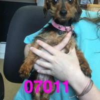 Adopt A Pet :: THELMA - Kiln, MS