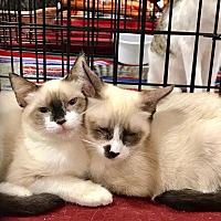 Adopt A Pet :: Oksana & Oskar *Bonded Pair* - Los Angeles, CA