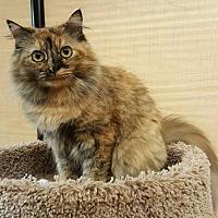 Adopt A Pet :: Peach - Trenton, NJ