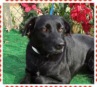Labrador Retriever Mix Dog for adoption in Marietta, Georgia - LIL MAY (R)