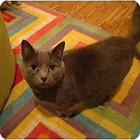 Adopt A Pet :: Gracie--PETSMART - Muncie, IN