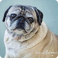 Adopt A Pet :: Mala - Phoenix, AZ