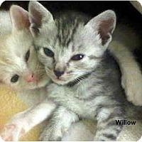 Adopt A Pet :: Willow - Jacksonville, FL