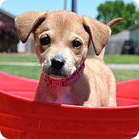 Adopt A Pet :: *Cara Melly - PENDING - Westport, CT