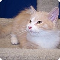 Adopt A Pet :: K-Yvonne2-Tisha - Colorado Springs, CO