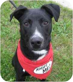 Labrador Retriever Mix Dog for adoption in Walker, Michigan - Newton