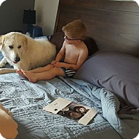 Adopt A Pet :: Apricto - Evergreen, CO