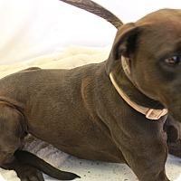 Adopt A Pet :: Bella - Huachuca City, AZ