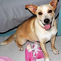 Adopt A Pet :: Maddie - Cuero, TX