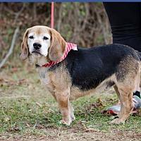 Adopt A Pet :: Huck - Bristol, TN