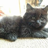 Adopt A Pet :: Cindy Bear - Garden City, MI