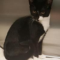 Adopt A Pet :: Evelyn - Americus, GA