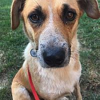 Adopt A Pet :: Zelah - Cincinnati, OH