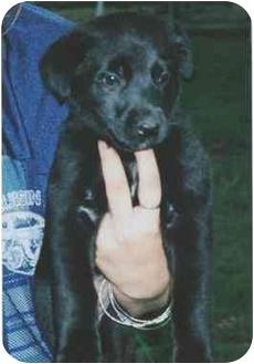 Retriever (Unknown Type) Mix Dog for adoption in Owatonna, Minnesota - Abigail