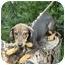 Photo 3 - Dachshund Mix Puppy for adoption in Somerset, Kentucky - Buddy