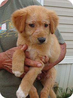 Retriever (Unknown Type) Mix Puppy for adoption in Fairmount, Georgia - Blondie
