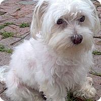Adopt A Pet :: Seesay - loxahatchee, FL
