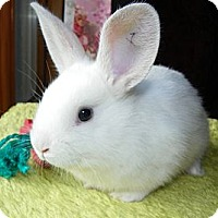 Adopt A Pet :: Parsley - North Gower, ON