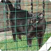 Adopt A Pet :: JAZZ Lovers II - cincinnati, OH
