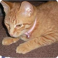 Adopt A Pet :: B.C. - Baby Cat - lake elsinore, CA