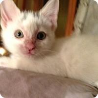 Adopt A Pet :: peanut - Whitestone, NY