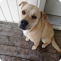 Adopt A Pet :: Bentley - Caledon, ON