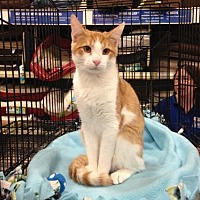 Adopt A Pet :: Eli Joe - Ephrata, PA