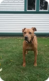 Pit Bull Terrier Mix Dog for adoption in Shelter Island, New York - Trooper