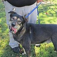 Adopt A Pet :: Mikko - Baxter, TN