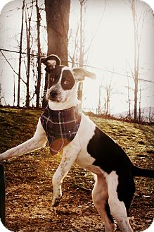 Terrier (Unknown Type, Medium) Mix Dog for adoption in Sylva, North Carolina - Ruby