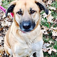 German Shepherd Dog Mix Dog for adoption in Christiana, Tennessee - Nina