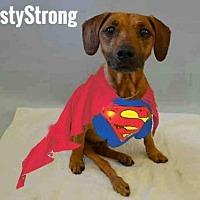 Adopt A Pet :: Rusty - Dartmouth, MA