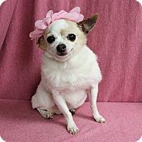 Adopt A Pet :: Minnie Pearl - Greensboro, MD