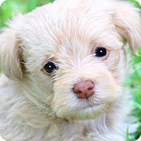 Adopt A Pet :: CODY(GORGEOUS