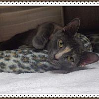 Adopt A Pet :: JOLENE - Marietta, GA
