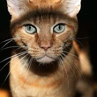 Adopt A Pet :: Orange Julius Caesar Salad - Studio City, CA