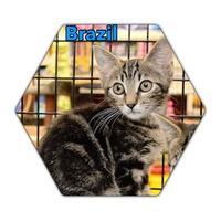 Adopt A Pet :: Brazil - Bradenton, FL