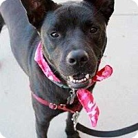 Adopt A Pet :: Sage ~Reduced Fee~ - Youngsville, NC