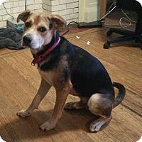 Adopt A Pet :: Buck - Toronto, ON