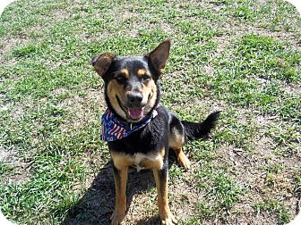 German Shepherd Dog Mix Dog for adoption in Tampa, Florida - Jack