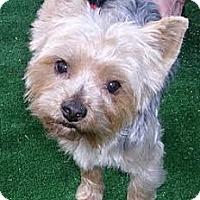 Adopt A Pet :: Miles - Orange, CA