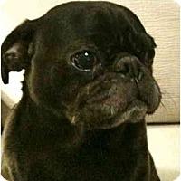 Adopt A Pet :: Cosby - Avondale, PA