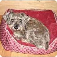 Adopt A Pet :: Harley - Columbia, SC